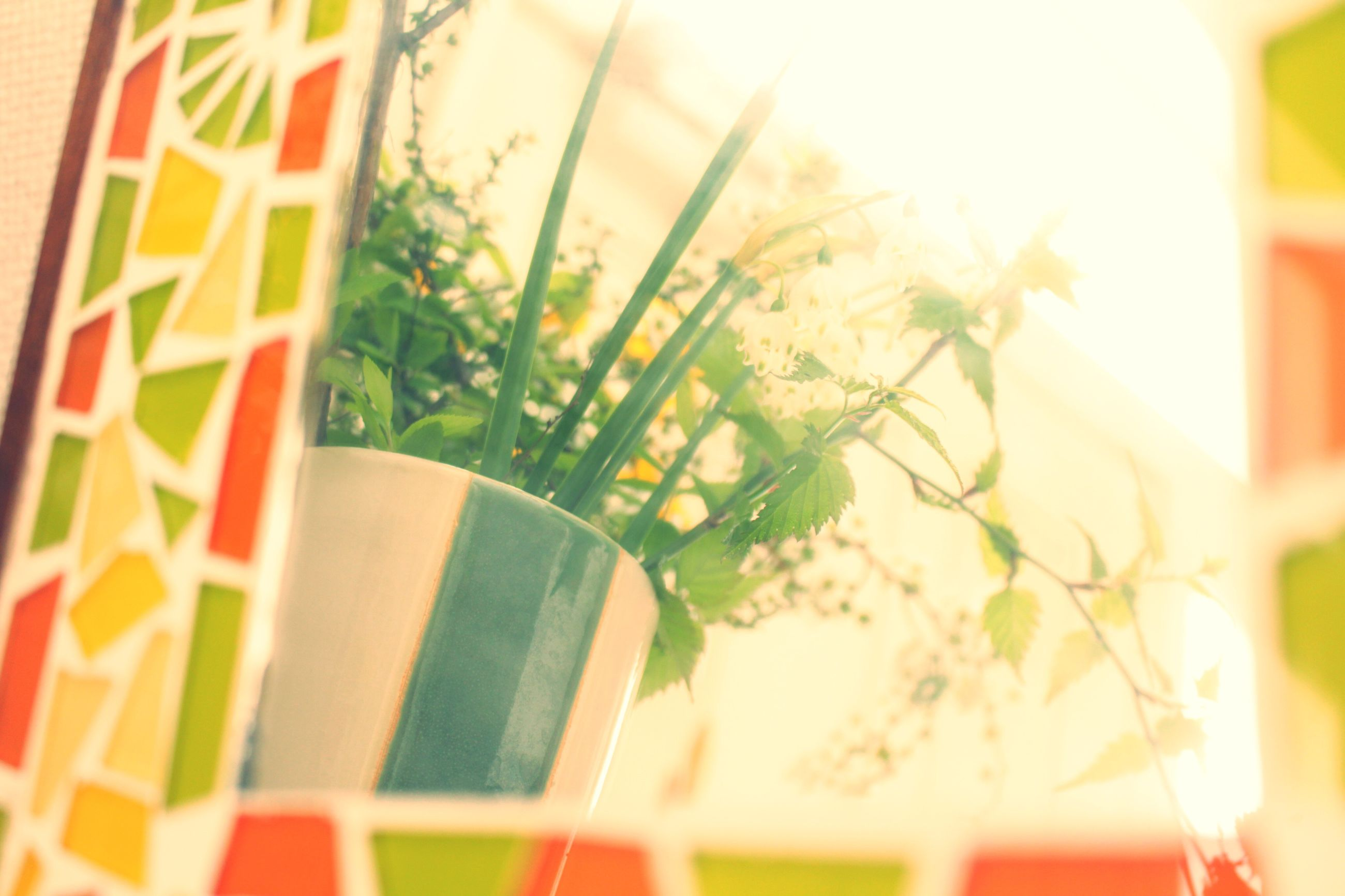 growth, close-up, flower, plant, selective focus, focus on foreground, sunlight, nature, potted plant, no people, indoors, day, built structure, fragility, freshness, leaf, architecture, low angle view, beauty in nature