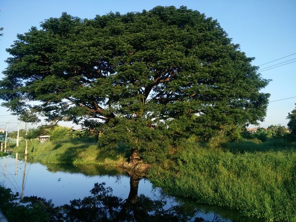 Beauty In Nature Day Growth Nature No People Outdoors Sky Tree Water