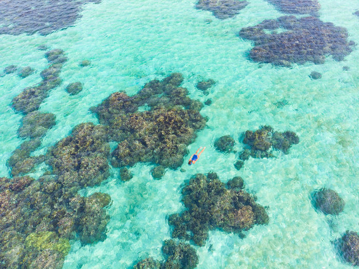 High angle view of coral in sea
