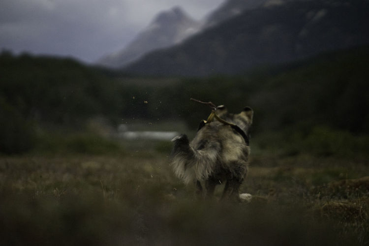 Dog Harness Dogs Fun Nature SONY A7ii Adventure Friend Patagonia Sled Dog Sports Photography