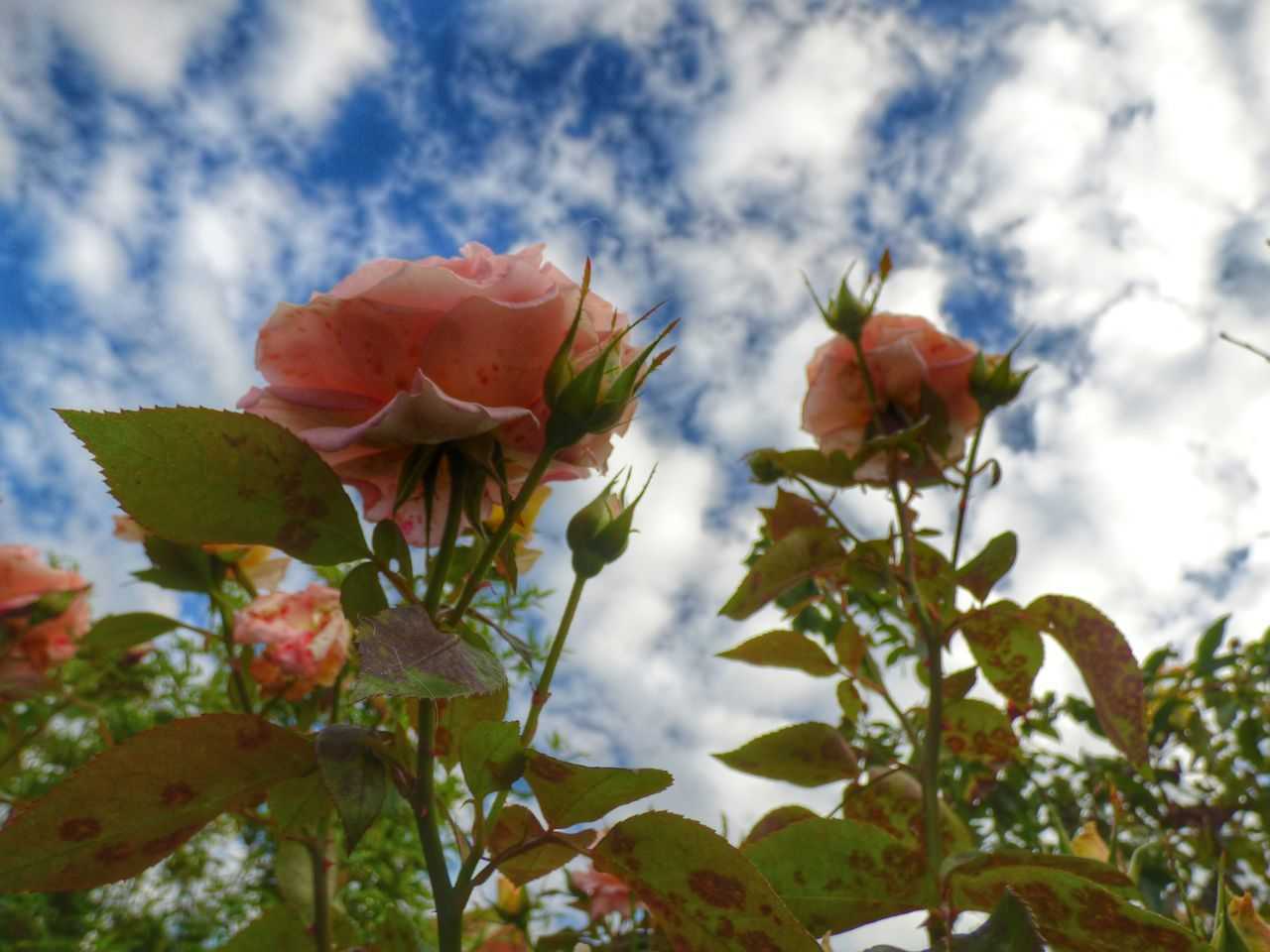 flower, growth, nature, fragility, beauty in nature, petal, freshness, plant, no people, flower head, day, outdoors, close-up, blooming, low angle view, sky
