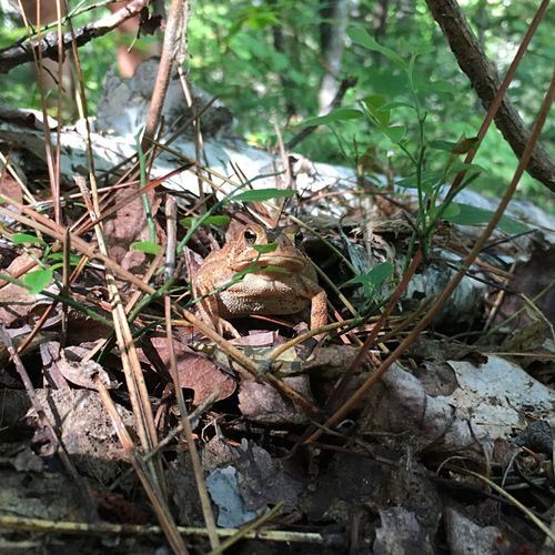Forest Frog Hiking Adventure Hiking Trail Travel Destinations Travel EyeEmNewHere Algonquinprovincialpark Algonquin Park Campinglife Camping Plant Nature Day Water No People Land Growth Animal Outdoors Animals In The Wild Animal Wildlife Animal Themes