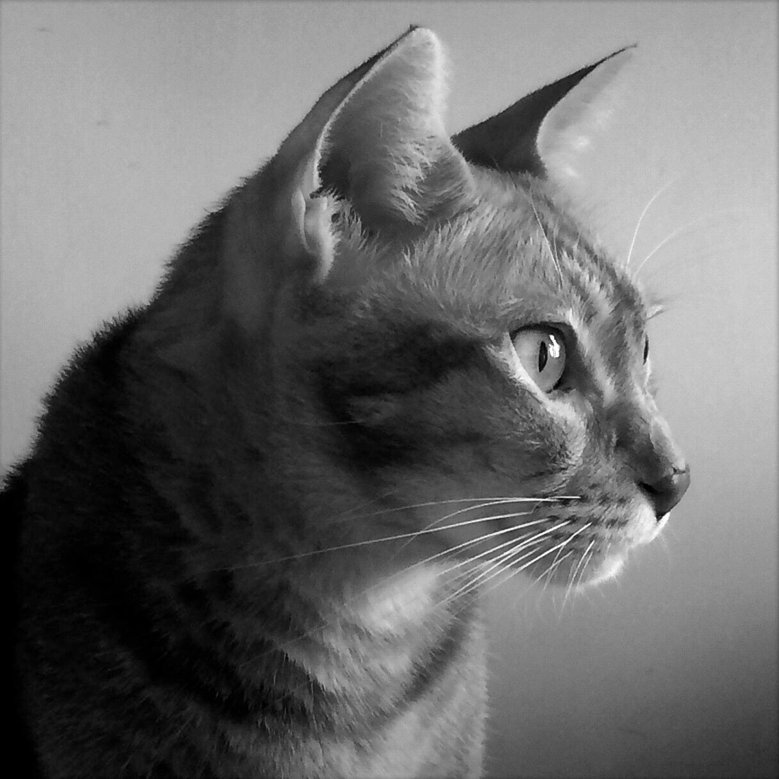 one animal, domestic cat, animal themes, cat, pets, domestic animals, feline, whisker, mammal, indoors, close-up, animal head, looking away, animal eye, alertness, no people, animal body part, zoology, animal, vertebrate
