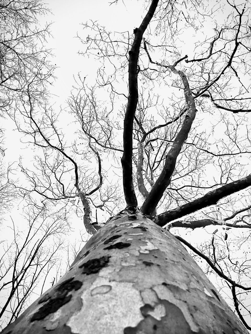 tree, bare tree, branch, tree trunk, low angle view, nature, day, outdoors, no people, beauty in nature, sky, dead tree, close-up