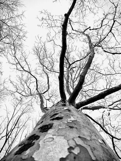 Up. Tree Tree