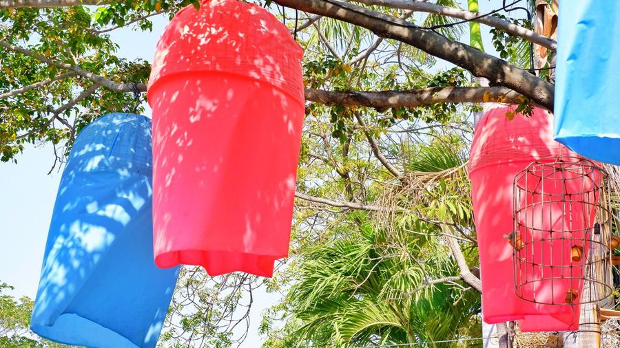 Low angle view of red flags hanging on tree trunk against blue sky