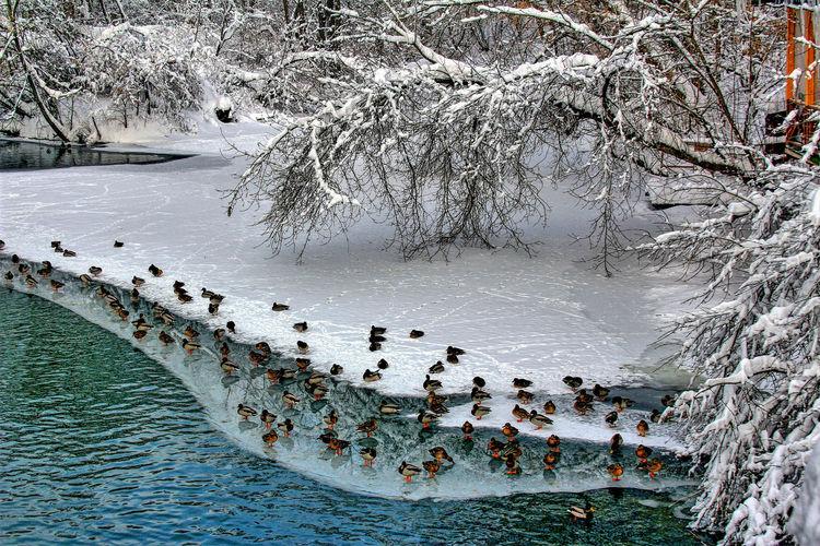 Bird Frost Water