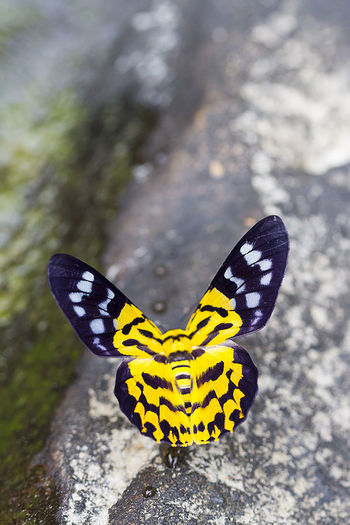 Animal Markings Animal Themes Animal Wildlife Animal Wing Animals In The Wild Beauty In Nature Butterfly Butterfly - Insect Close-up Day Fragility Full Length Insect Nature No People One Animal Outdoors Spotted Spread Wings Yellow