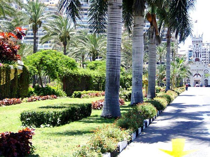 El Montazah Elmontazah Royal Garden Alexandria Egypt Alexandria Palm Trees Green Garden