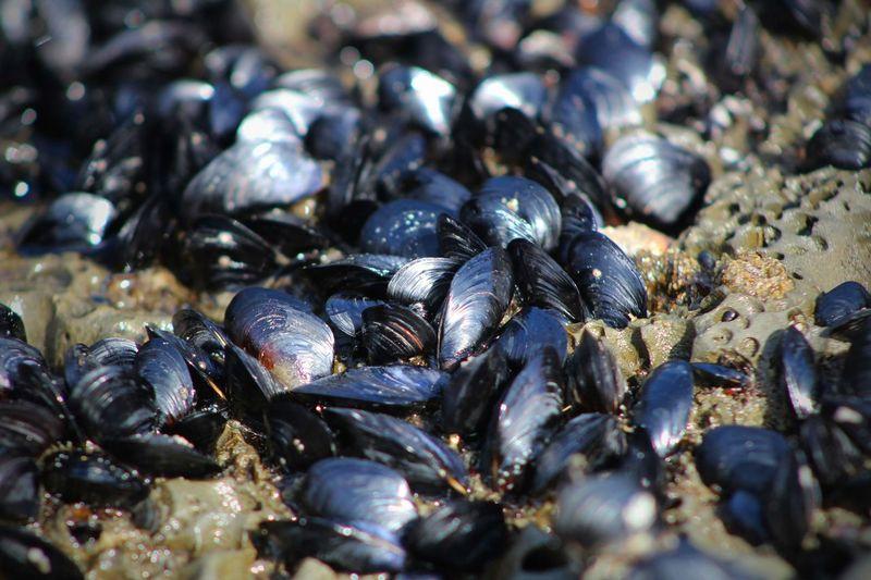 Full frame shot of shellfish on rock