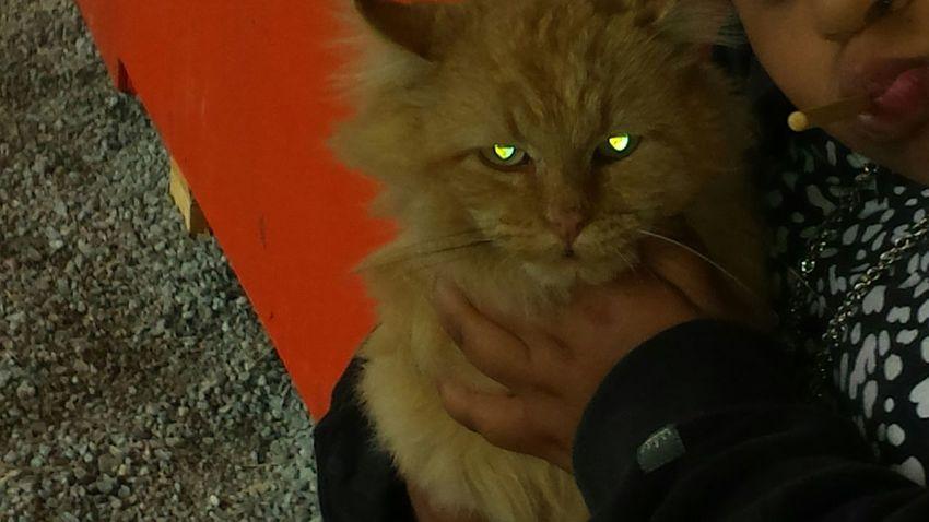 Cat♡ Evil Eye Taking Photos Life In Motion