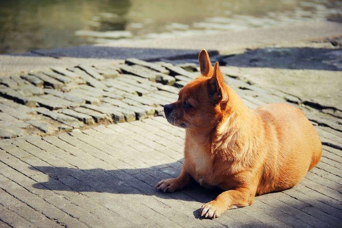Streetphotography Enjoying The Sun Enjoying Life Beautiful Eyes NOD Nap Sunshine Little Dog Tired Relaxing Take A Break Dog Love Dog River Riverside