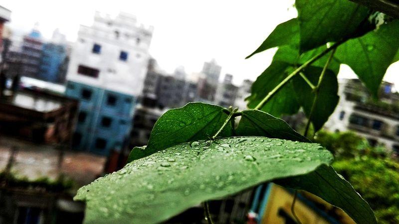 Gdarif Arifislam Leaf Close-up Green Color