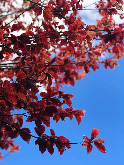 🍂 Tree Plant Branch Beauty In Nature Plant Part Leaf Nature Fragility Low Angle View Tranquility Growth Close-up Red Sky Autumn Change Day Outdoors Flower No People
