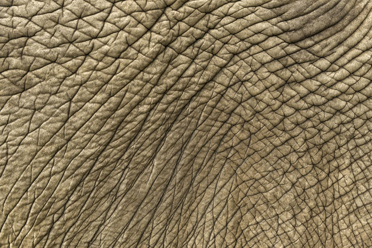 Elephant Skin Animal Themes Elephant Animal Skin Textured  Close-up Backgrounds Wrinkled Natural Pattern Pattern Animal Pattern Full Frame Rough Thick Wrinkly Wrinkled Skin Cracks Copy Space Fauna Biology Conservation Animal Patterns Textures Textured  Animal Wildlife