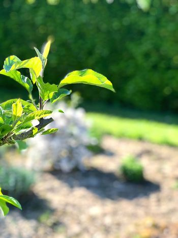 Plant Growth Leaf Plant Part Focus On Foreground Nature Green Color
