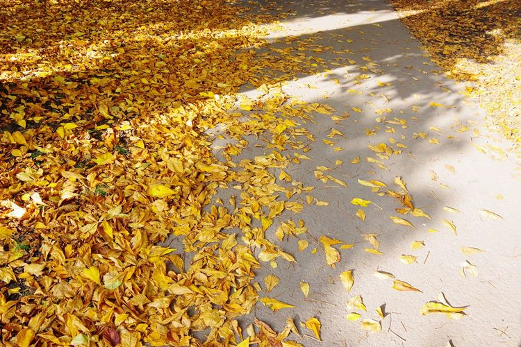 Nature Beauty In Nature No People Yellow Autumn Leaf Backgrounds Tranquility Close-up Outdoors Scenics Day Freshness Cardiff