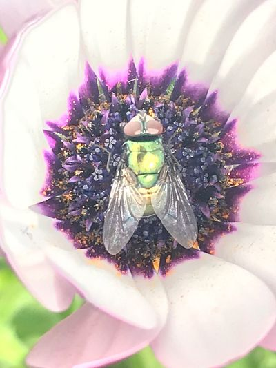 Flower Flowering Plant Plant Freshness Beauty In Nature Fragility Vulnerability  Insect