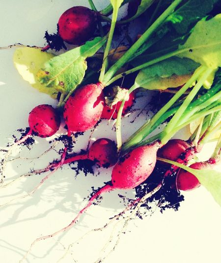 Farm Summer Vegetables Nature Food