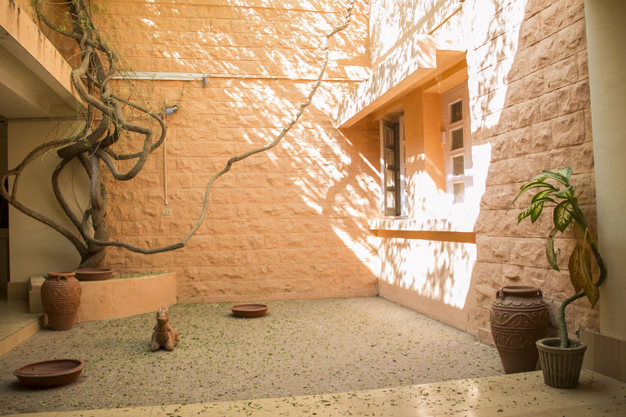 Abandoned House Architecture Bright Light Built Structure Courtyard  Curved Tree Curvy Dappled Sunlight Day Desert House India Indoor Outdoor Indoors  Mud Walls Play Of Light Potted Plant Rajasthan Sunny Afternoon Sunshine The Secret Spaces Tree Tree Trunk Window