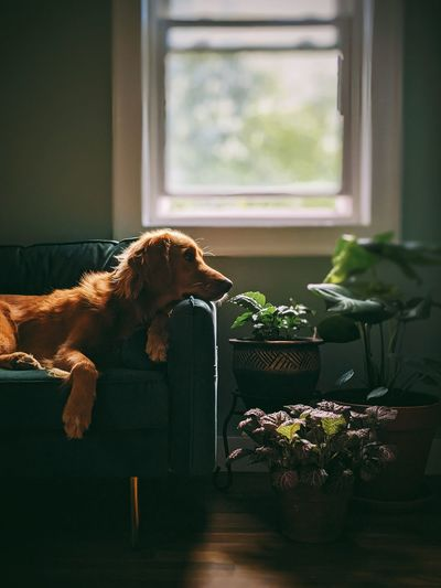 View of a dog looking at window