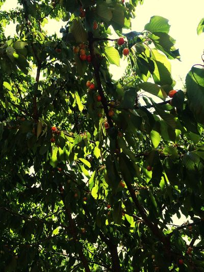 Cerries