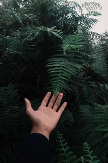 Cropped image of hand holding fern against tree