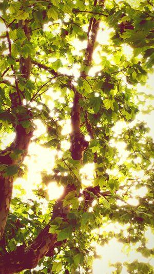 Naturephotography Nature Tree Beauty In Nature Natureza Verde Naturaleza Hermoso