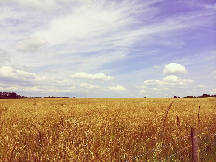 Scenic view of agricultural field against sky