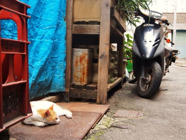 My Space! 猫 Cat