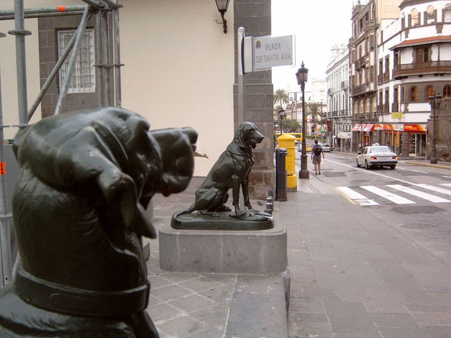 Animal Representation Art And Craft Canary Islands City Life Creativity Gran Canaria Las Palmas Perspective Sidewalk Statue Street Urban