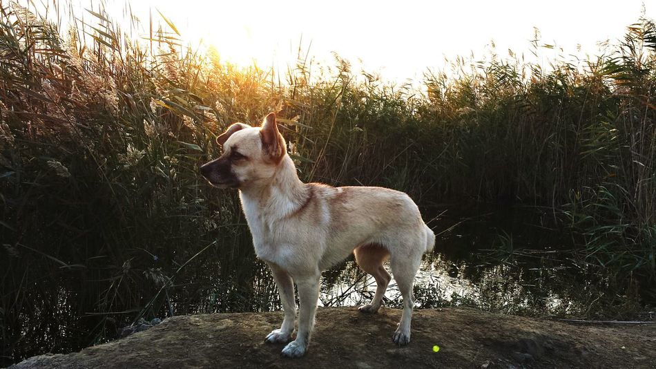 Domestic Animals One Animal Dog Pets Plant Nature Beauty In Nature