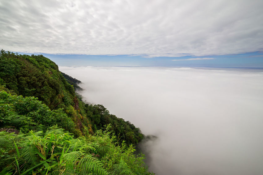 aerial view of rain forest Cloud Tree Aerial View Beauty In Nature Cloud - Sky Day Fern Fog Landscape Mist Mountain Nature No People Outdoors Rain Forest Scenics Sea Sky Tranquil Scene Tranquility Tree Water