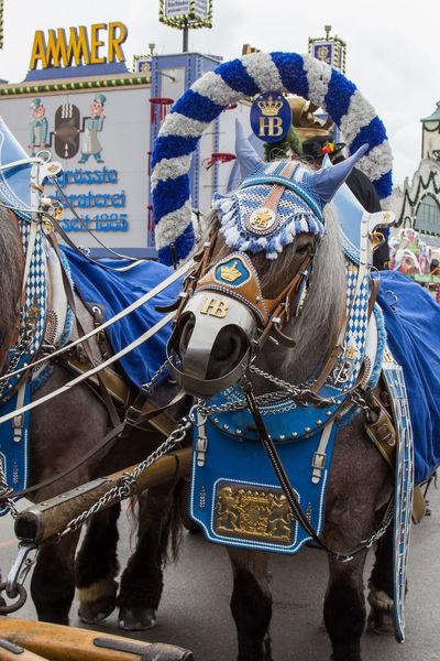 A day at Oktoberfest Oktoberfest Oktoberfest 2017 Tradition Wiesn Wiesn 2017 Bierwagen Horse Transportation Working Animal