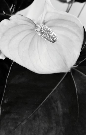 A Bird's Eye View EyeEm Black&white! Beauty In Nature Plant Beauty In Nature Flower Head Flower EyeEm Best Shots - Nature EyeEm Nature Collection EyeEm Nature Lover Eyeem Photography The Week Of Eyeem EyeEm Around The World Showcase August 2016 EyeEm Gallery Botany EyeEmBestEdits