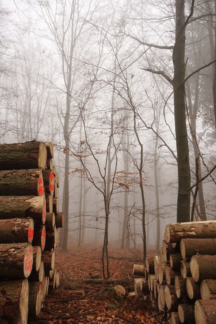 tree, log, wood - material, timber, fog, wood, bare tree, forest, stack, land, deforestation, nature, firewood, tranquility, plant, no people, lumber industry, winter, field, outdoors