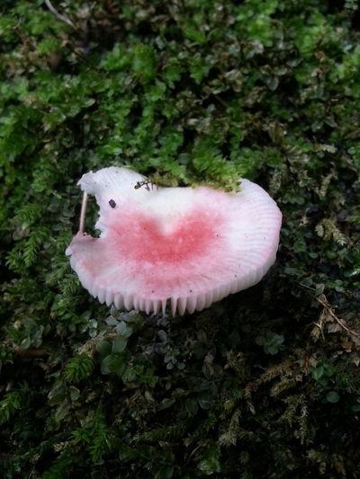 Mushroom きのこーのこのこ♪ 真ん中がハート♪