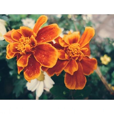 ▪ VSCO ▪ Vscofocus ▪ Vscocam ▪ Vscobrasil ▪ flowers ?