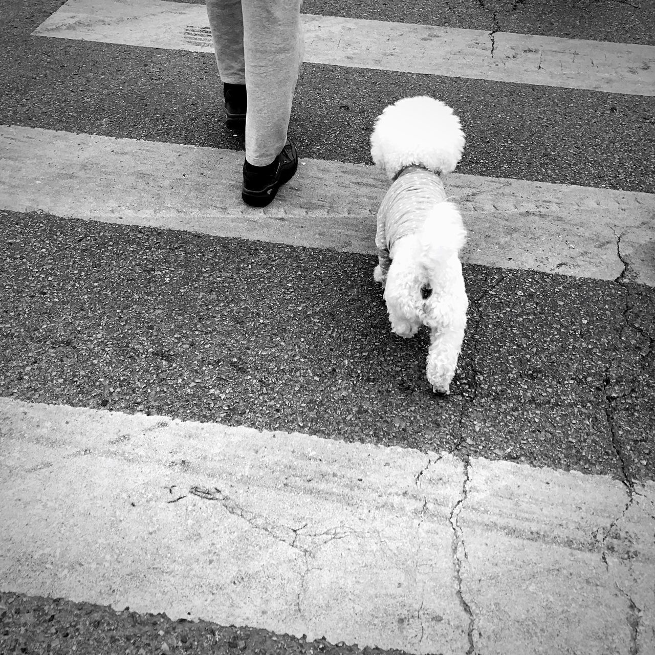 dog, pets, one animal, domestic animals, low section, mammal, real people, day, outdoors, standing, human leg, one person, women, human body part, people