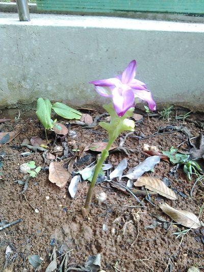 una preciosa flor/a precious flower Flower Nature Puertoricotourism Borikén