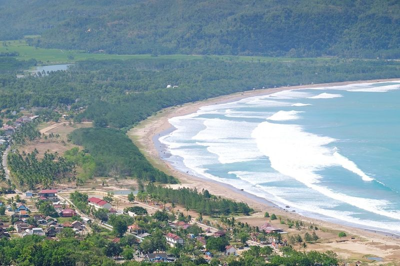 Pacitan Bay Plant High Angle View Nature Land Beauty In Nature Day Water Field Sea Green Color Environment Beach Landscape Outdoors Scenics - Nature Growth Tranquility Tranquil Scene No People