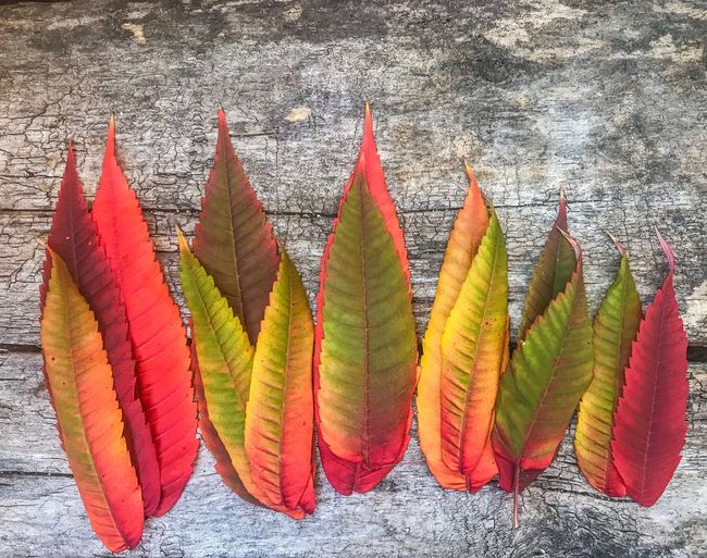 Close-up of multi colored leaves on wood