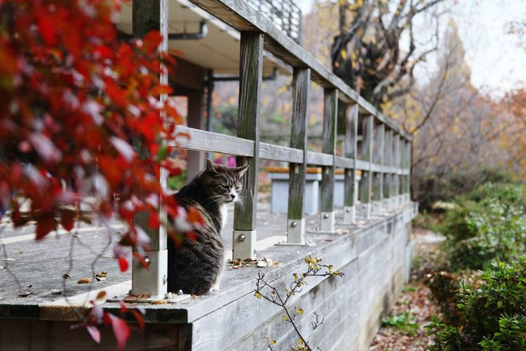 japan Sinjyukugyoen Sinjyuku cat
