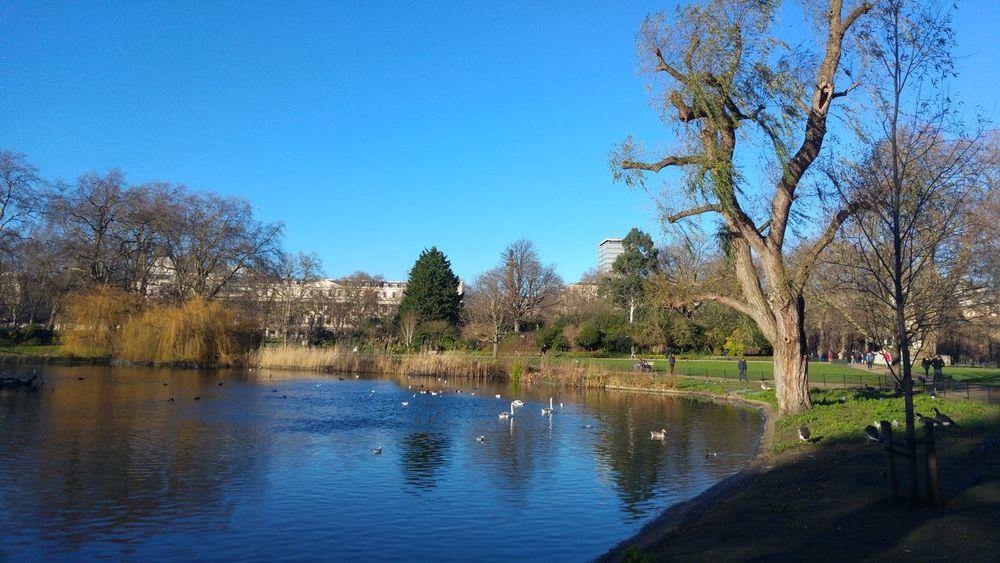 Taking Photos Relaxing St James Park London  Birds🐦⛅ Blue Sky Water Reflections Bird Photography Landscape_Collection Landscape_photography The Tourist The Tourist Mission Reflected Glory Blue Wave