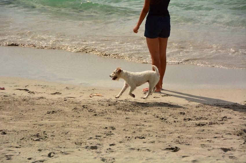 Summer Dogs Hello World Beachphotography Travelling EyeEm Best Shots EyeEmBestPics EyeEm Nature Lover
