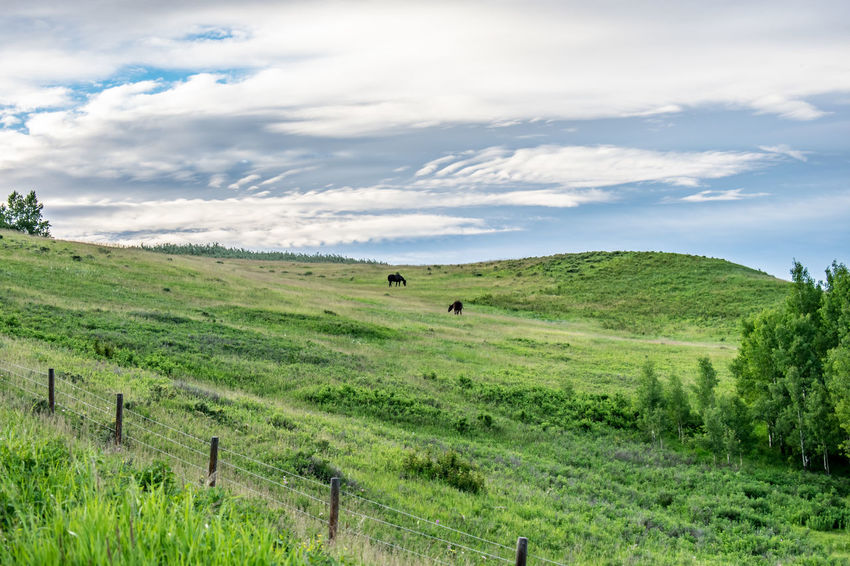 Alberta Beauty In Nature Canada Cloud - Sky Cochrane, Alberta Day Field Glenbow Ranch Provincial Park Grass Green Color Horse Landscape Mammal Nature Nature No People Outdoor Outdoors Scenics Sky Tranquil Scene Tranquility