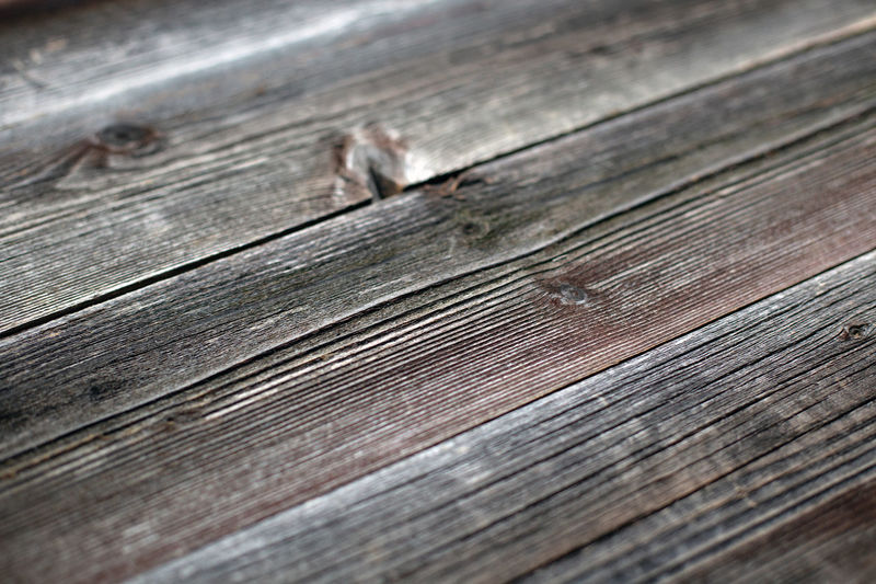High angle view of lizard on wooden plank