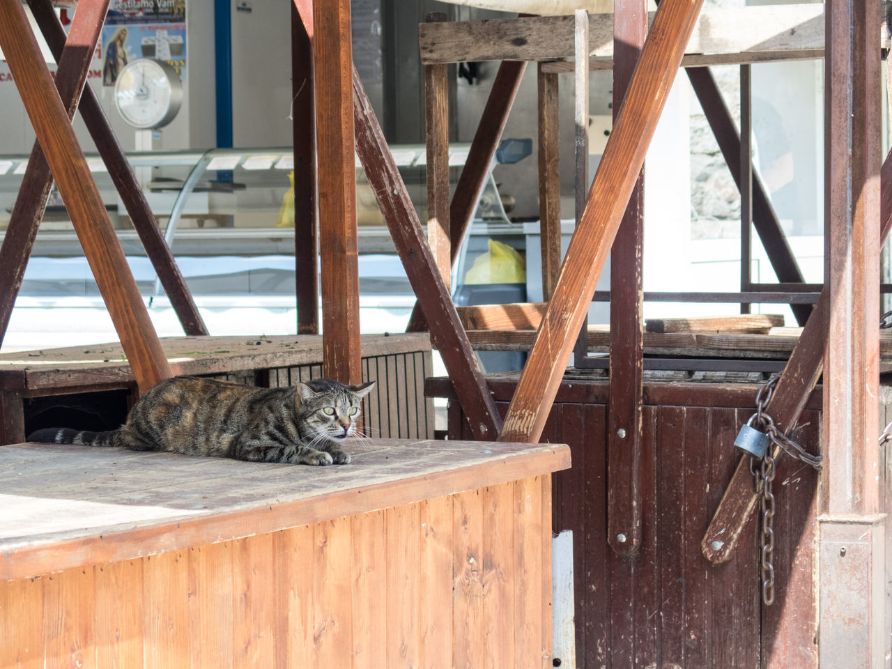 animal themes, one animal, domestic cat, mammal, domestic animals, day, feline, pets, wood - material, no people, outdoors