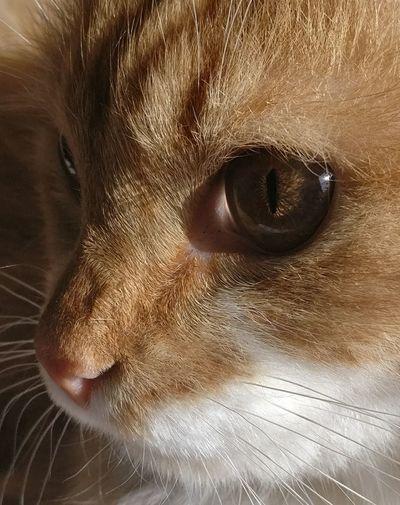 Cat Eyes Nofliter Catbeauty GoldenCat light and reflection Reflection Perfection