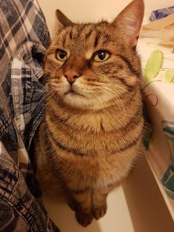 EyeEm Selects Pets Portrait Looking At Camera Close-up